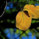 Last of the Autumn Leaves by ronsphotos