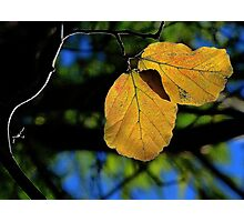 Last of the Autumn Leaves Photographic Print