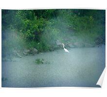 Big Bird in the Rain Poster