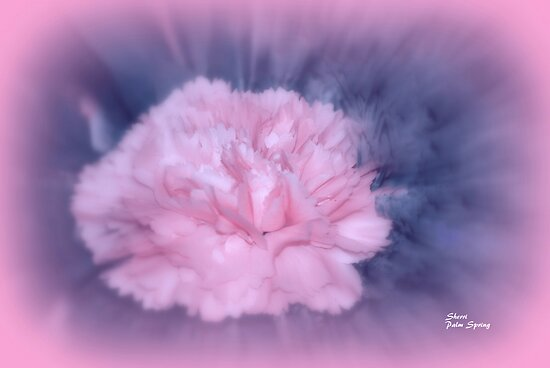 LET THERE BE LIGHT AND THERE WAS PINK!! by Sherri     Nicholas