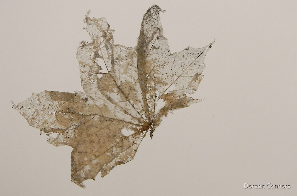leaf by Doreen Connors
