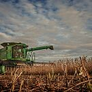 Bean Harvest by Steve Baird