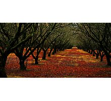 Fall in line Photographic Print