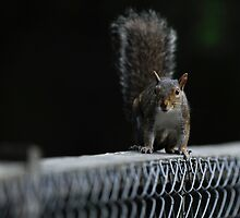 My Chain Link Buddy by Joe Jennelle