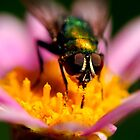 Fly on Flower by Michael Cadelina