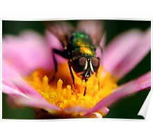 Fly on Flower Poster