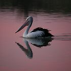 PELICAN SUNSET by another-paul