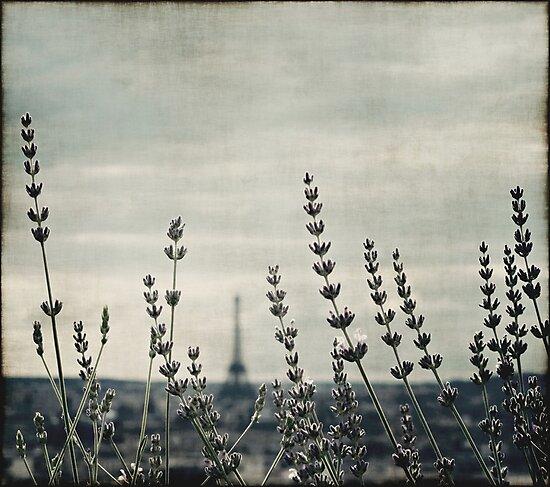 French Lavender III by Anne Staub