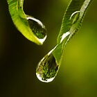 whispering drops by lensbaby