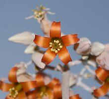 Bell Flower by Trent Suski