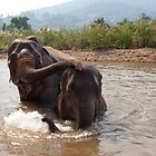 2 elephants bathing in thailand by Birgit Van den Broeck
