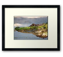 Gator up Close and Personal Framed Print