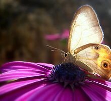 Sunny Butterfly by Vanessa Barklay