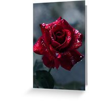 First Rose Greeting Card