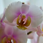 Orchid by stay-focussed