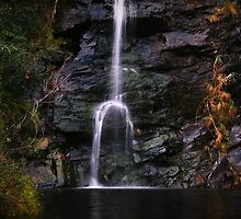 Waterfall Gully by Paula McManus