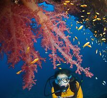 Diving in Egypt by Fiona Ayerst