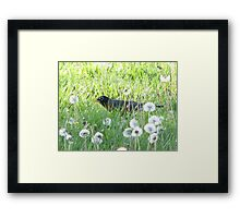 Cozy in the lion-patch Framed Print