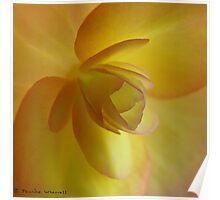 Begonia heaven Poster