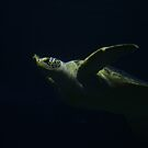 Tortoise in the Deep by RockyWalley