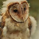 Baby Barn Owl by ArianaMurphy