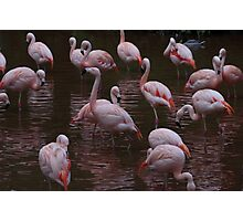Flamingo pink Photographic Print