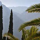 Palms at Deia, Majorca, Spain by Nick  Gill