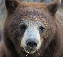 Mama Bear by Alyce Taylor