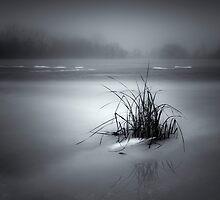 islet by Jaromir
