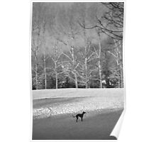 Dog in the snow, black and white conversion. Poster