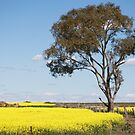 Road to Maryborough  by MIchelle Thompson