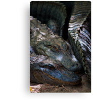 """Scaly Snuggles"" Alligators at Cheyenne Mountain Zoo Canvas Print"