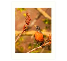 Robin and Sumac Art Print