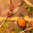 Robin and Sumac by ArianaMurphy