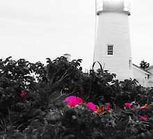 Wild Roses at Pemaquid Lighthouse by Sue Baumgardner