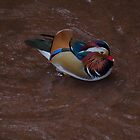 Mandarin Duck by DEB VINCENT