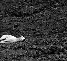 sleeping beauty by dattagawade