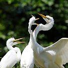Crazy Egret Chicks  by Joe Jennelle