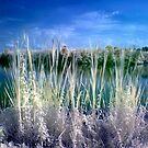 Adda River - Italy by Luca Renoldi