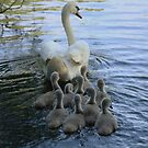 Mother Swan And Cygnets by Franco De Luca Calce