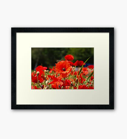 Nature Scape Poppies Framed Print