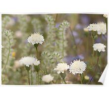Desert Flowers - White Blossoms Poster