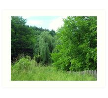 Lonely willow, Targu Ocna, Province of Moldavia, Romania Art Print