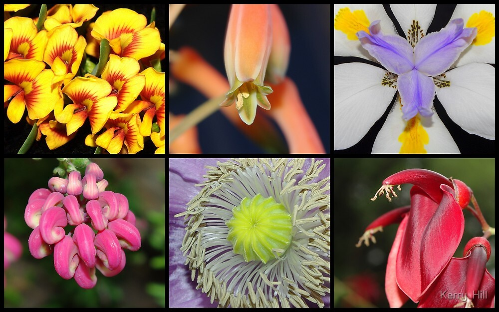Collage of flowers by Kerry  Hill