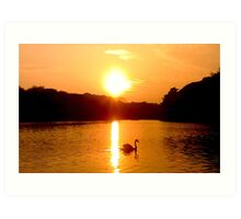 Yarrow Valley Sunset with Swan Art Print