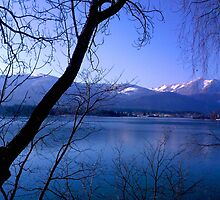 Lake in Austria, framed by trees by Becky Jackson