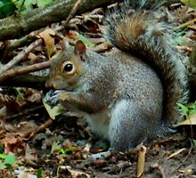 Squirrel in Heaton Park by Becky Jackson