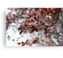 French Blossoms Canvas Print