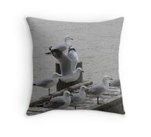 'JUST DROPPED IN!' Seagulls at Mannum on the Murray. Throw Pillow