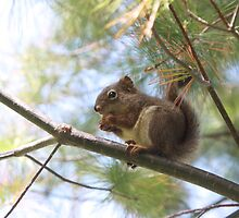 Our squirrels are meaner than your squirrels by Angela King-Jones